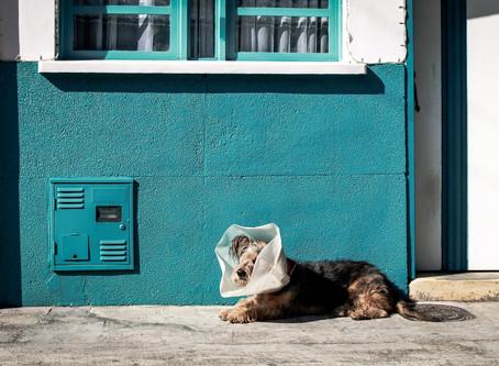 Pflicht zur Aufzucht von Hundewelpen in Quarantäne?