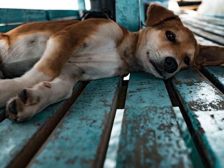 """Ist die Zuteilung eines Hundes als """"Haushaltsgegenstand"""" bei bereits längerem Getrenntleben möglich?"""
