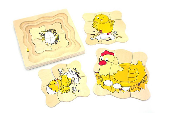 Chicken Lifecyle Puzzle