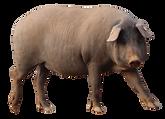 porco1.png