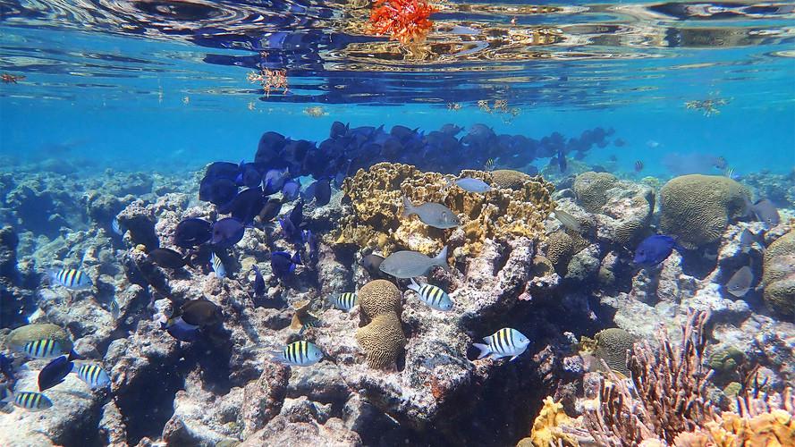 Snorkeling British Virgin Islands.jpg