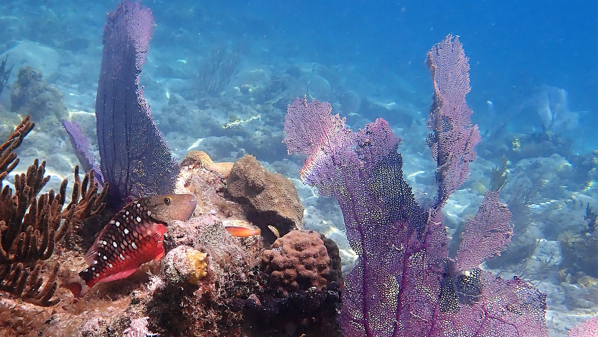 snorkeling near Indians BVI.jpg