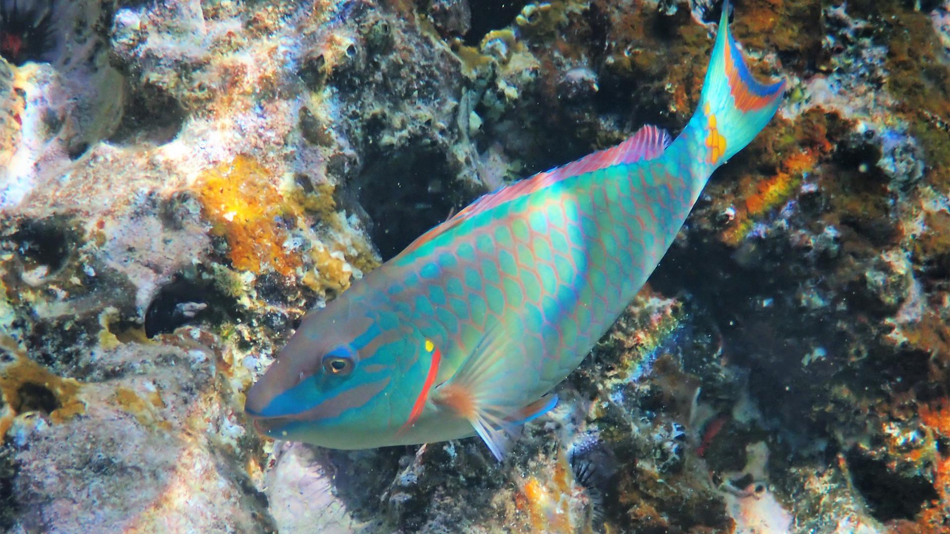 Parrotfish Caves BVI.jpg