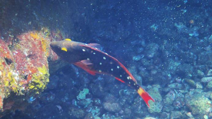 snorkeling Caves Norman Island British Virgin Islands.jpg