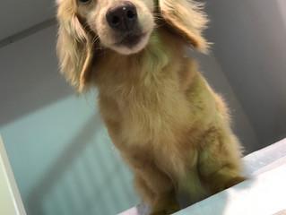 殺処分0にする為に 犬を保健所に連れて行く前に私達へご相談ください。