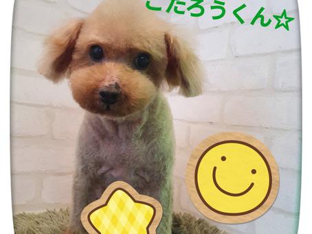 らぶはーと ペットサロン ペットホテル トリミング シャンプー 東京都品川区 口コミ1位 人気