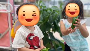 🍅収穫&園での様子~福岡県飯塚市中 幸袋らぶはーと保育園~ 365日開園 病児保育併設