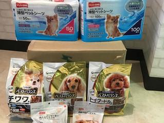 チワワ スタンダードプードル保護犬の為に物資の支援(寄付)届きました。愛知県豊川市千両町