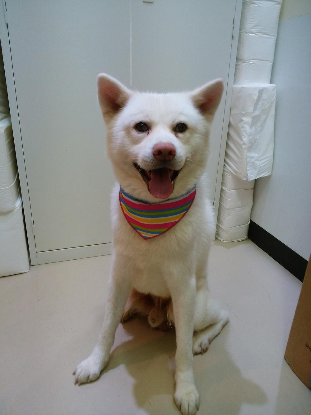 東京都品川区南大井保護犬