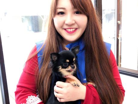 ボランティアさんを募集します。東京都品川区南大井で保護犬 お散歩 啓発活動 ボラトリ(ボランティアトリミング)