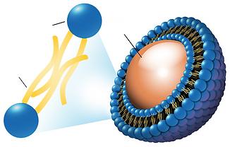 Nanoesfera.png