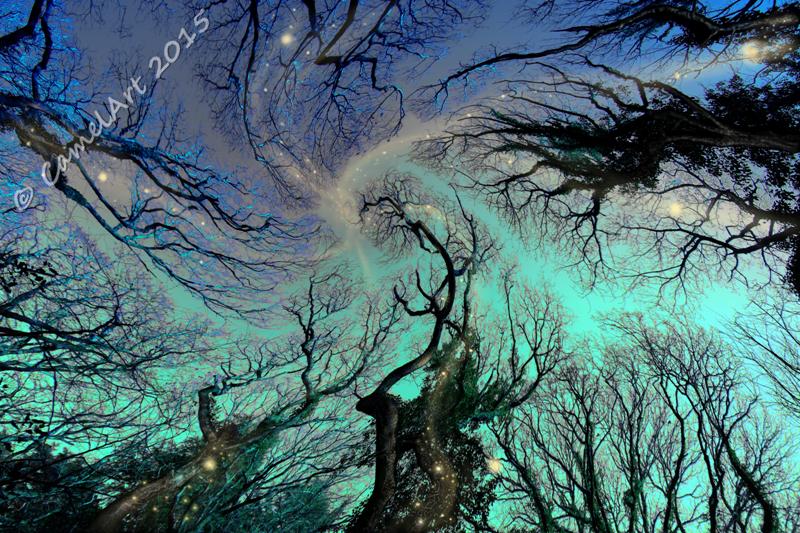 Dreaming Trees - Original