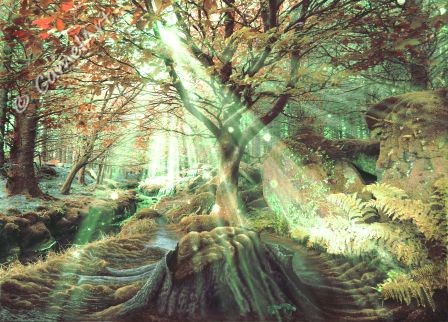 Enchanted Wood  30