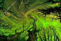 Dreaming Trees - vivid green