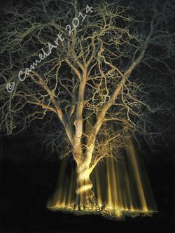 Midnight Tree 1