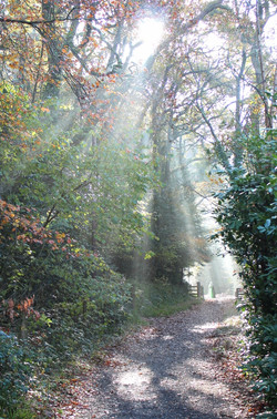 Apparition on the Trail