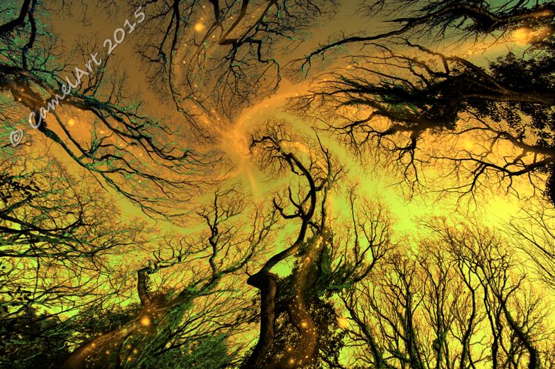 Dreaming Trees - Spring Light