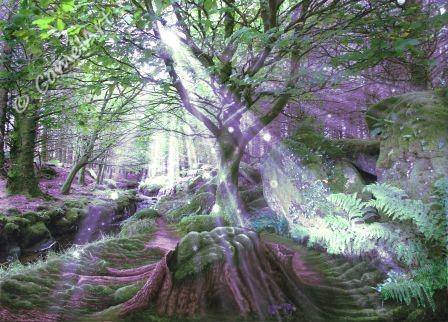 Enchanted  Wood 1