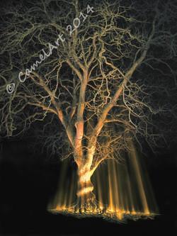 midnight tree coloured 24 (768x1024).jpg
