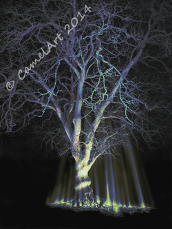 Midnight Tree - coloured 20