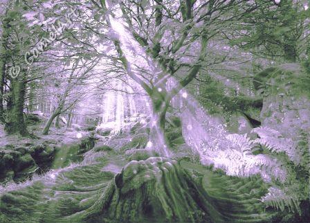 Enchanted Wood  38