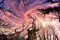 Dreaming Trees - Fantasy