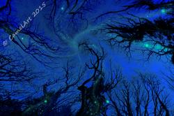 Dreaming Trees - Midnight Moonshine