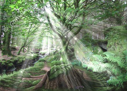 Enchanted Wood  26