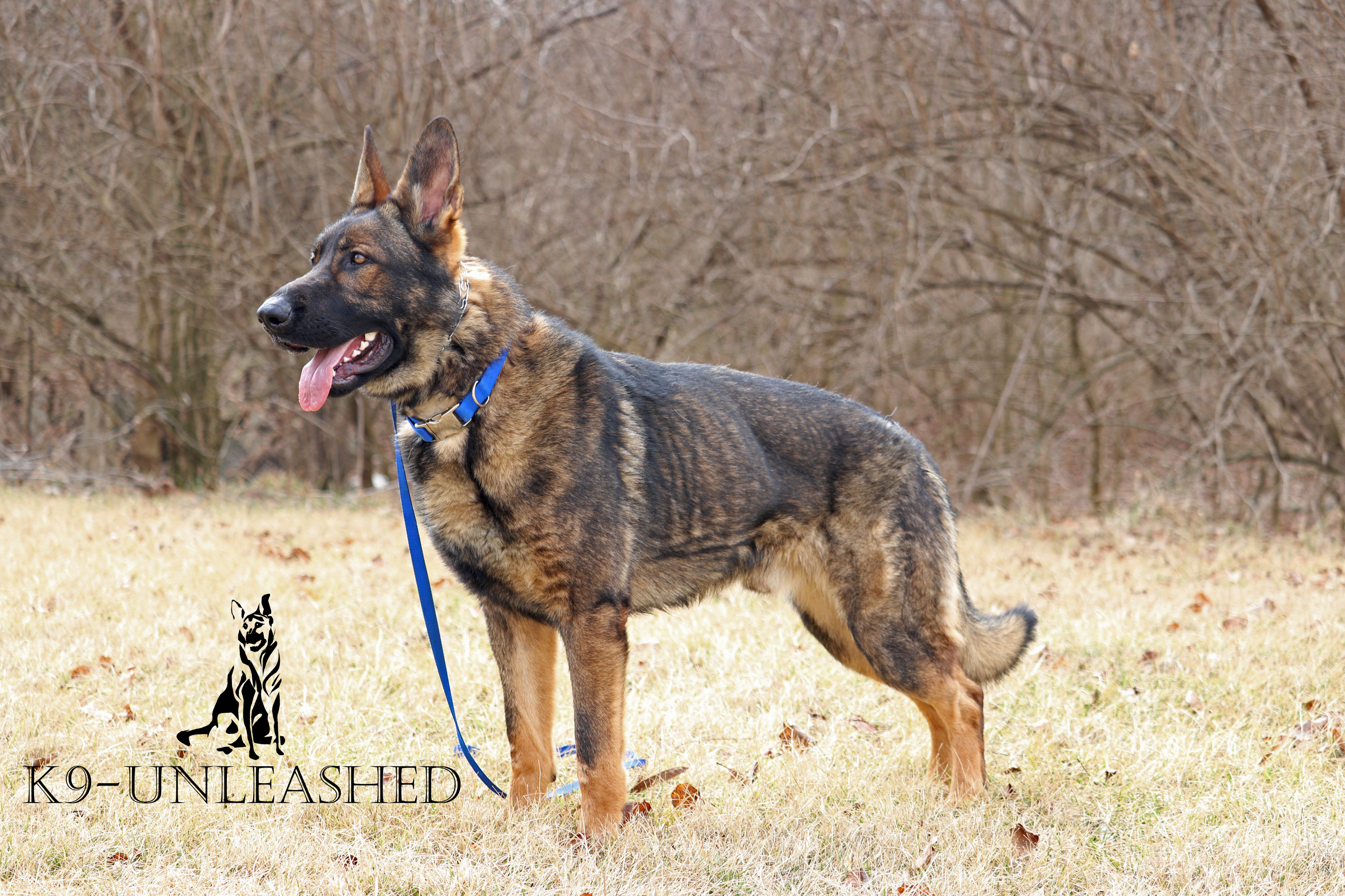 K9 Puppy, Stand Side, K9 Unleashed