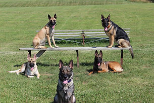 Dog training Lexington Kentucky