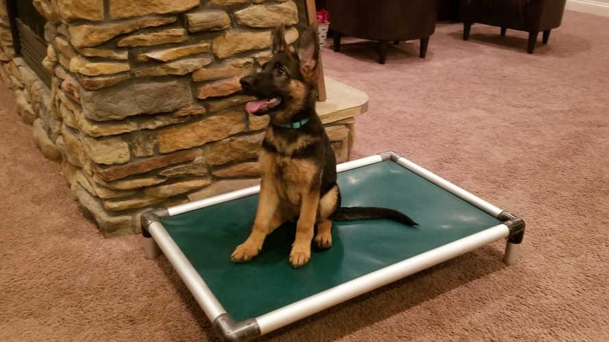 K9 Kira, Puppy sit stay