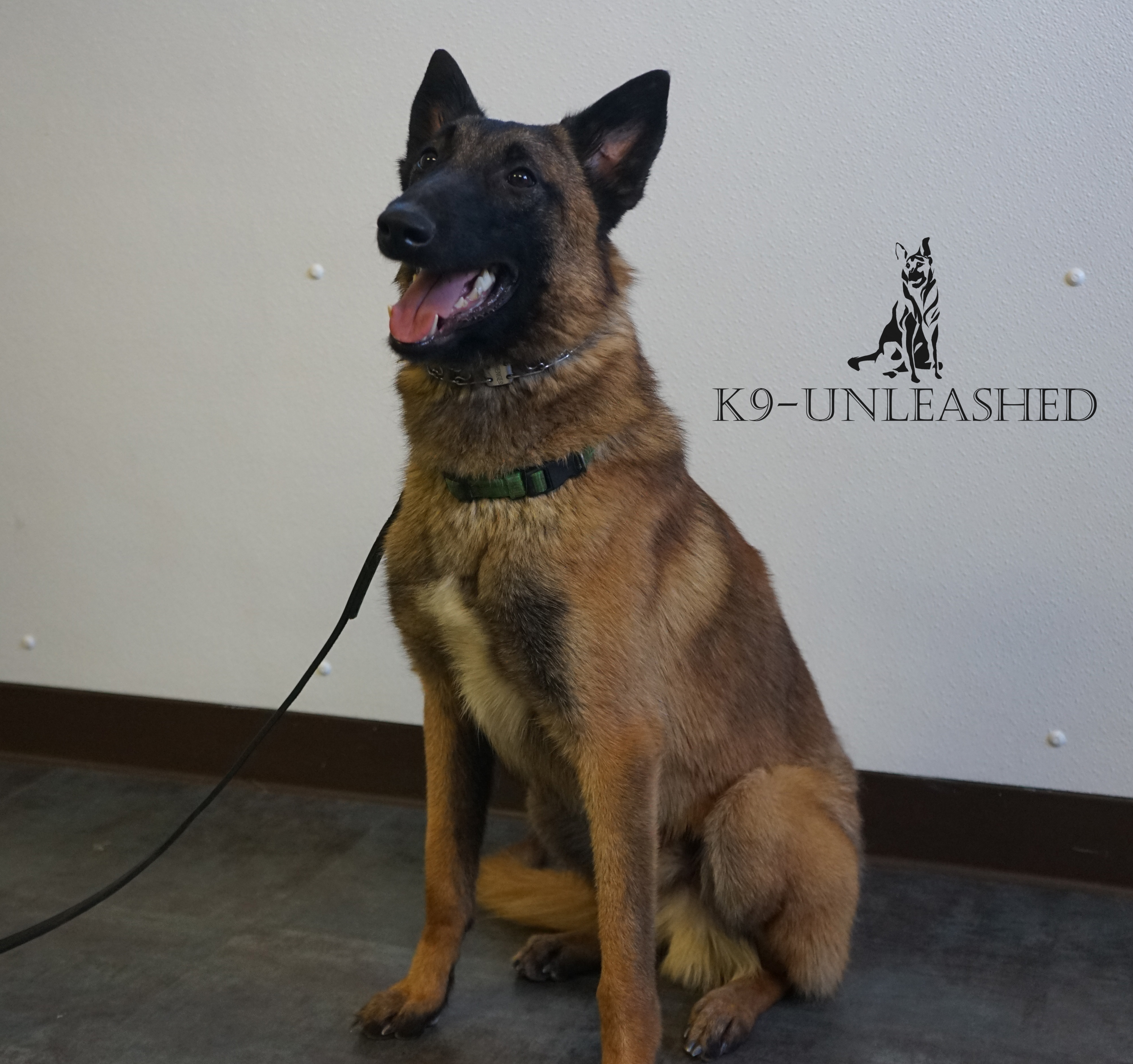 Chaos, Protection Dog for Sale