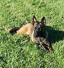 Obedience Dog Training Lexington Kentucky