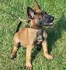 Beginner Puppy training Lexington kentucky