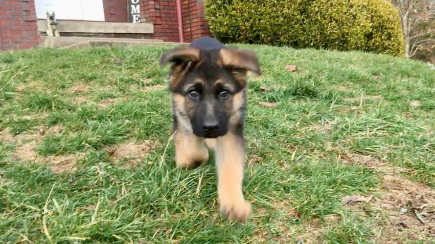 K9 Karma cute puppy