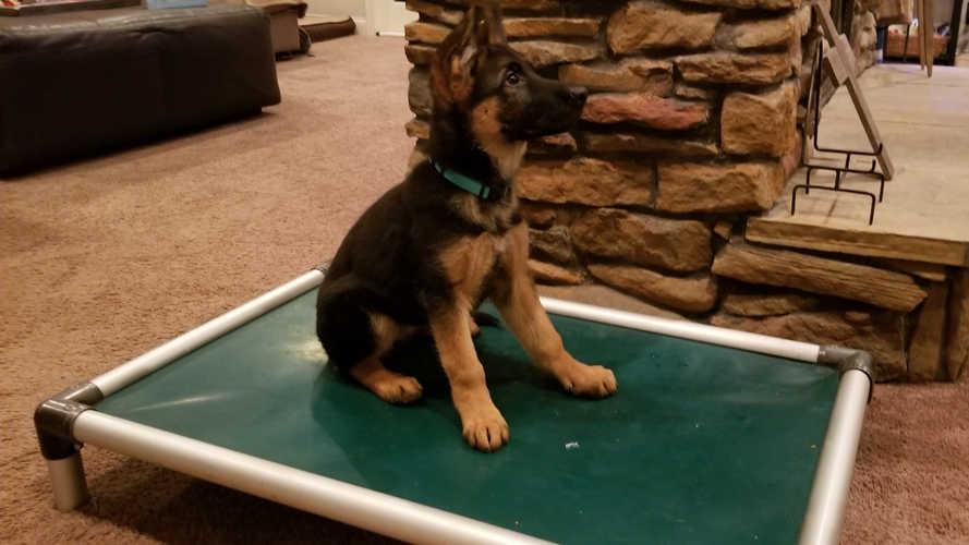 K9 Kira, puppy sit