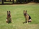 Dog training Louisville Kentucky