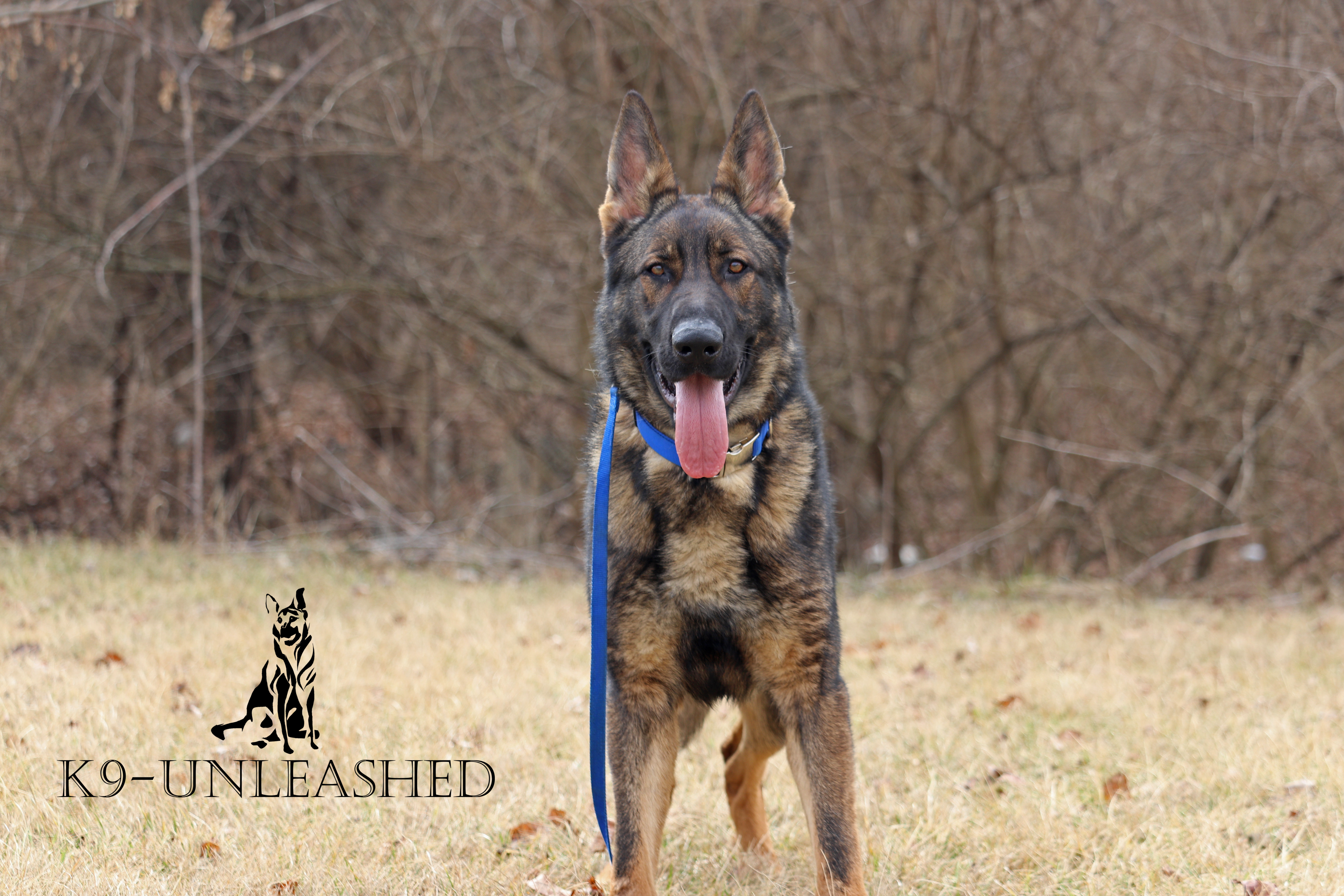 K9 Puppy, Stand, K9 Unleashed