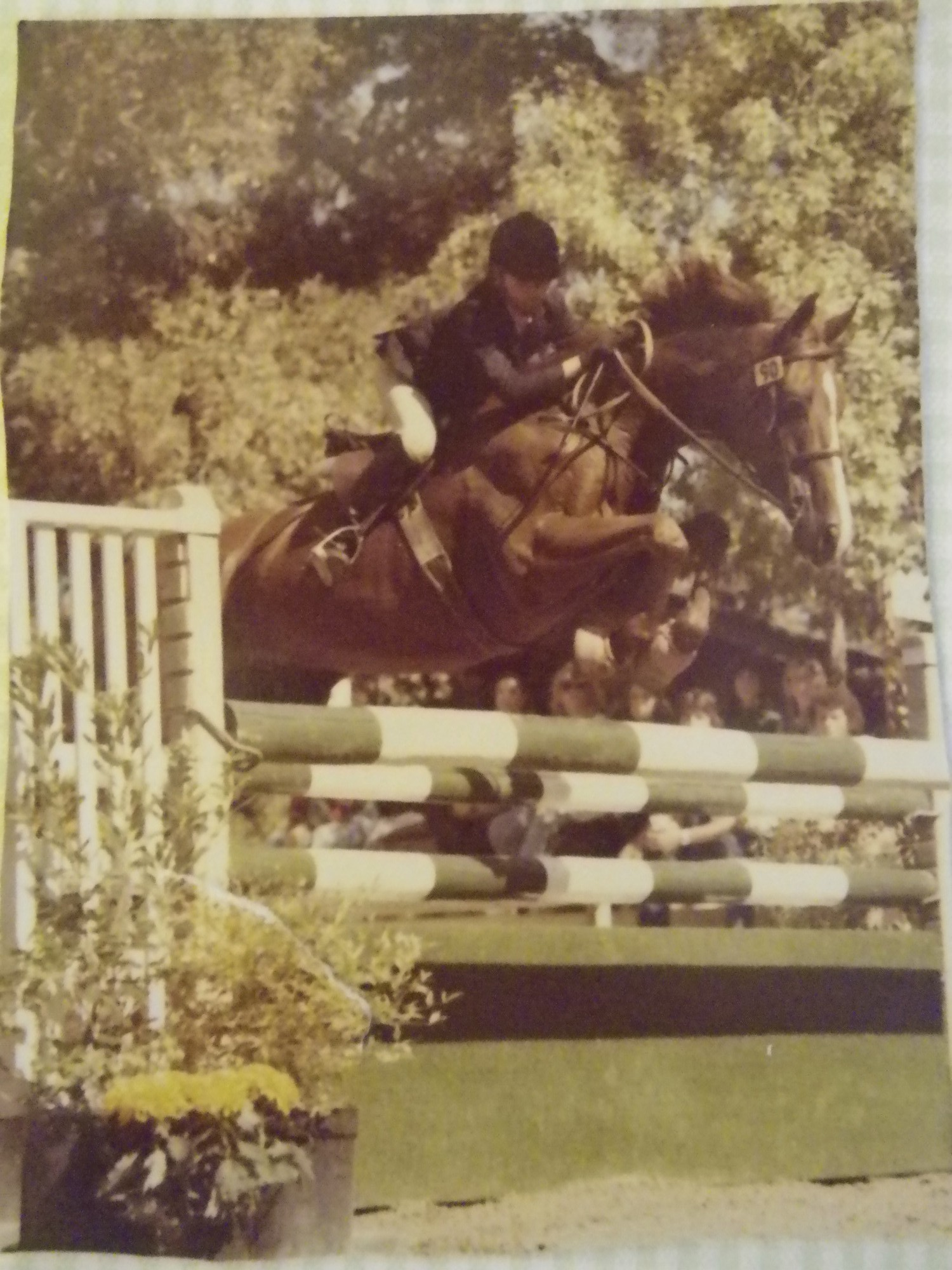 Palace Playboy at the Foxfield Jumping Derby