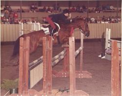Crusader at Monterey Horse Show 1984