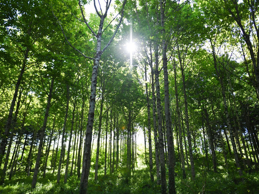 The future of forest carbon
