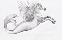 Sea Pegasus