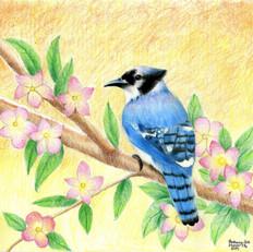 Bethany Blue Jay