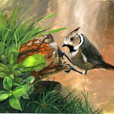 Elyssa Brown Bird