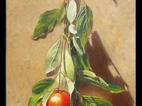 Hanging Apples
