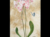 Butterfly and Orchids