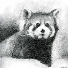 Benson Little Bear Sketch