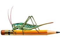 Katydid on a Pencil
