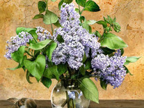 Lilacs and Sparrows