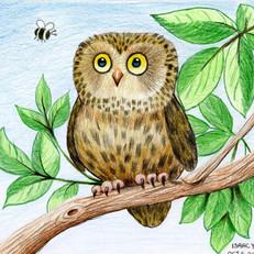 Isaac Owl